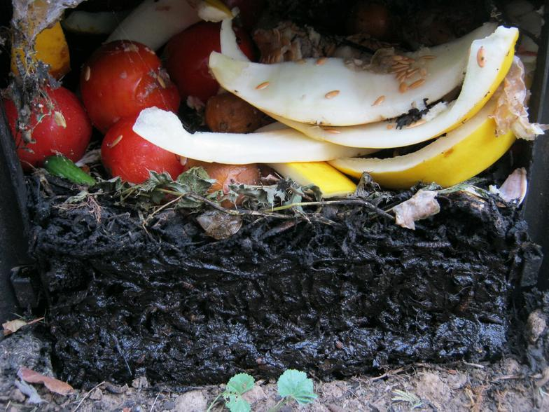 Image of decaying food scrap processed by BSFL in a composting bin. Upper layer - fresh scrap. Lower layer - humic mash