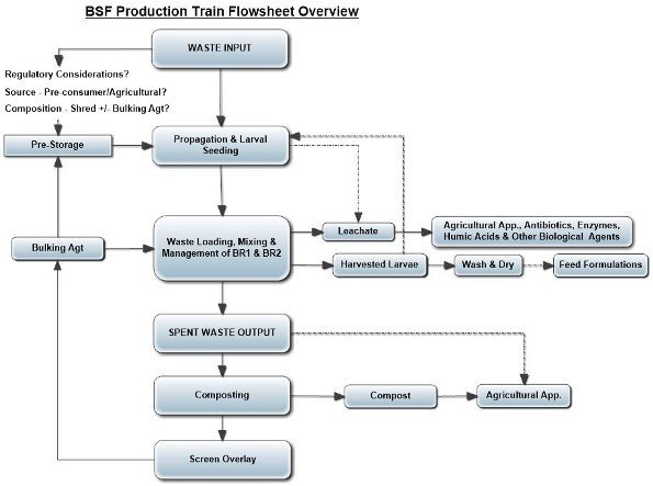 schematic flow diagram outlining processing steps in growing and harvesting BSF from food scrap